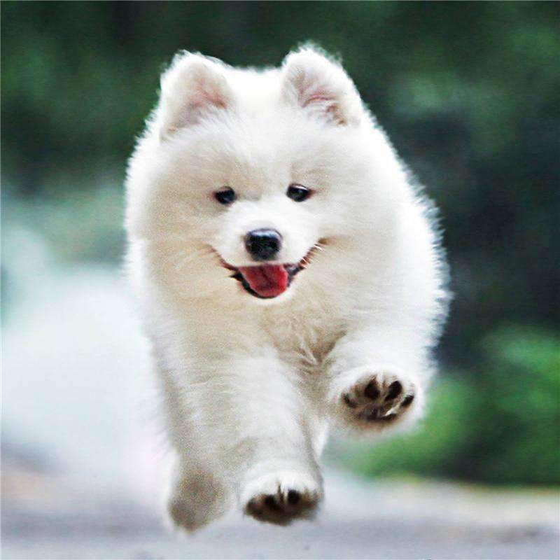 FREE White Puppy Running (Just Pay Shipping)