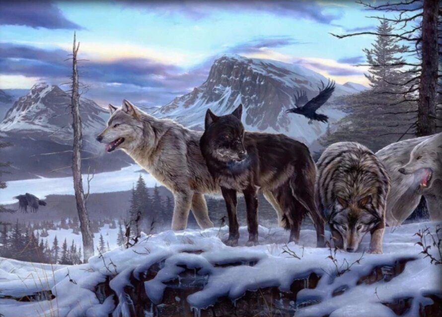 Rocky Mountain Wolves