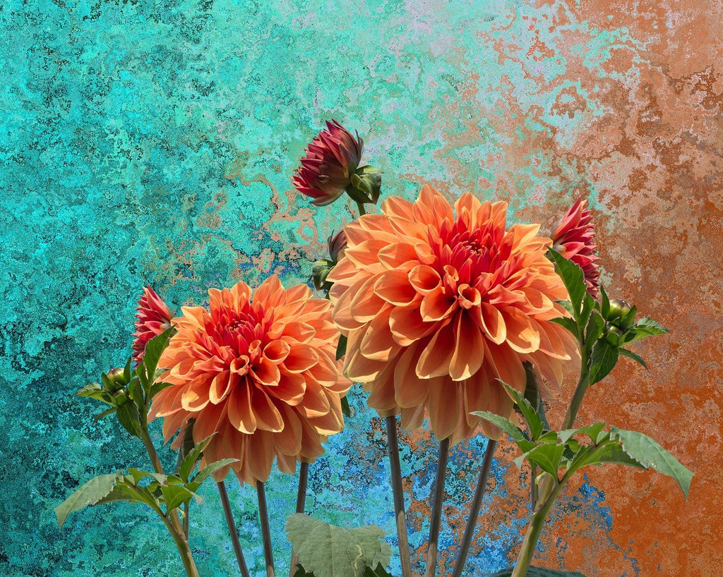 The Artistic Dahlias