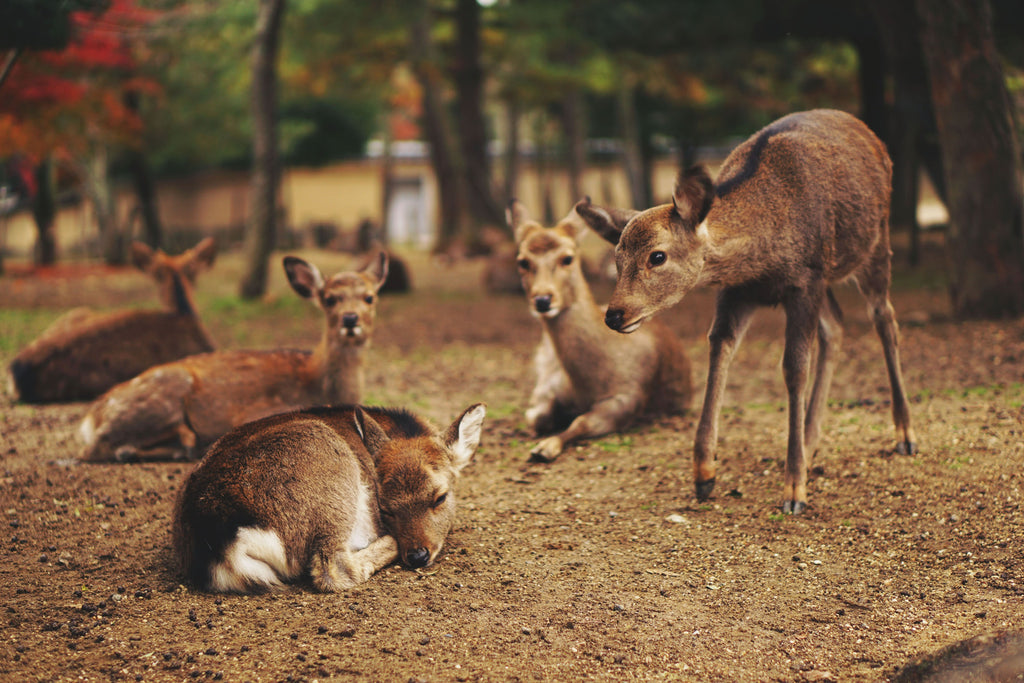 The Deer Together