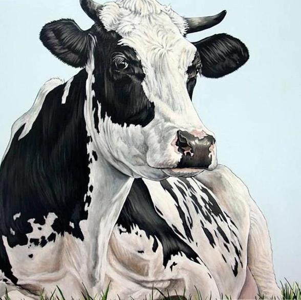 The Frisian Dutch Cow
