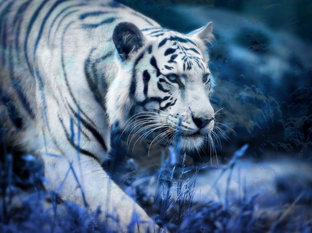 The White Tiger on the Move