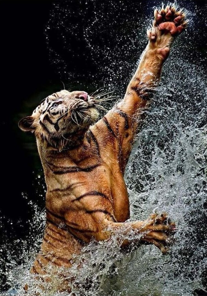 Tiger plays with Water