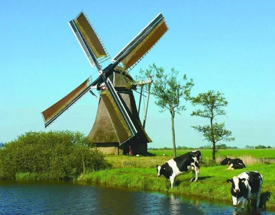 Windmill and Cows on the Water