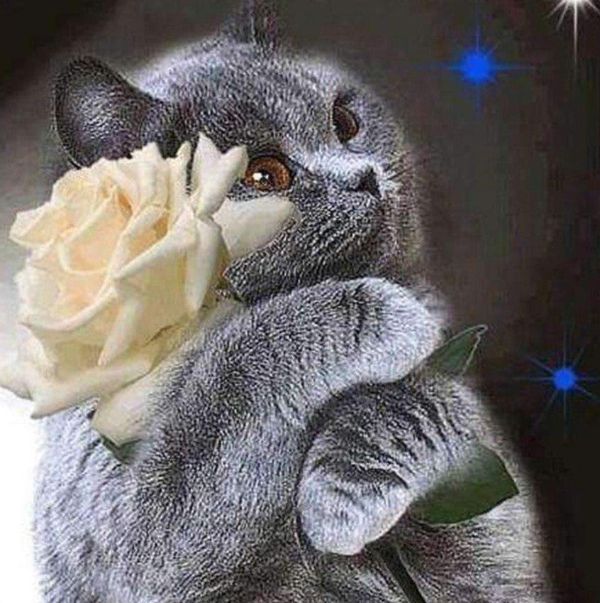 Cat with White Rose