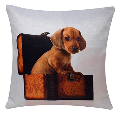 Bullahshah Dachshund Puppy Playing in Box Animal Print Square 17 x 17 Cushion Cover, Pillowcase for Sofa Bed Couch