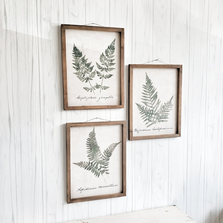 Set of 3 Printed Canvas Fern Prints