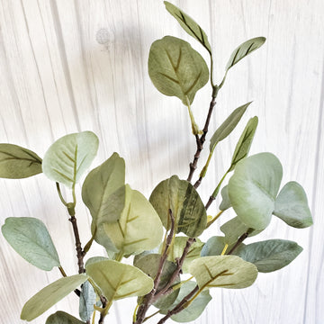 Eucalyptus Foliage Bunch