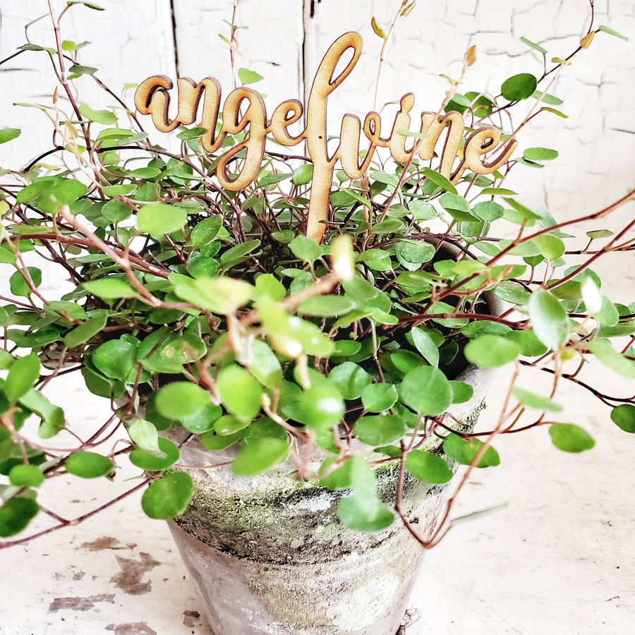 Wood Script Plant Pick....Angel Vine