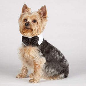 Black Bow Tie White Collar Size Small - A Pet's World
