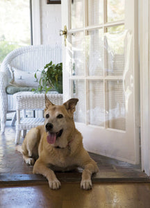 Protective Door Shield - A Pet's World