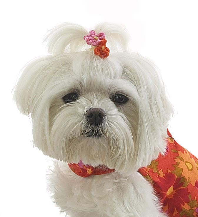 Dog Hair Flowers- Chenille Flowers with Elastics - A Pet's World