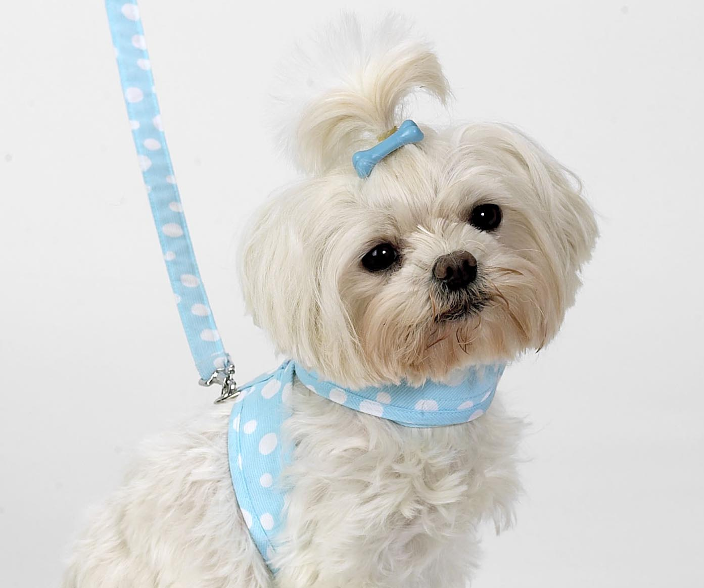Dog Hair Accessories-Dog Bone Barrettes - A Pet's World