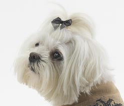 Dog Hair Bows- Glitter Bows - A Pet's World