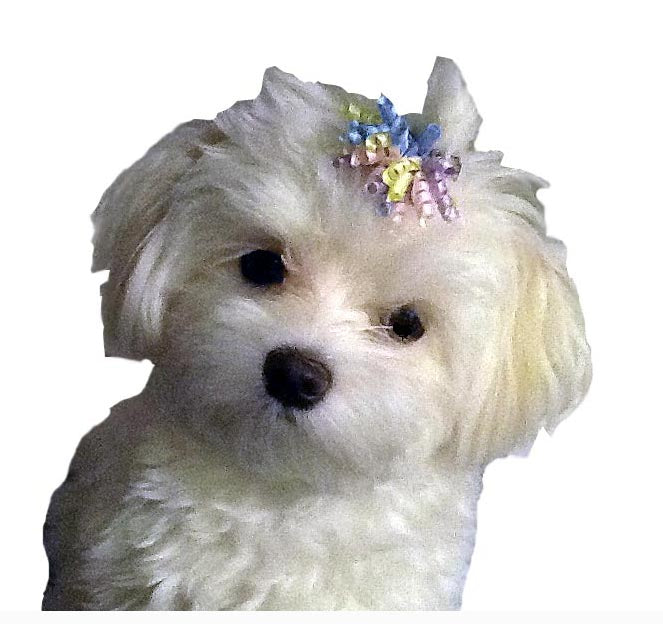 Dog Hair Accessory-Pastel Curly Ribbon Barrette - A Pet's World