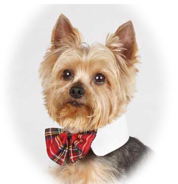Red Tartan Plaid Bow Tie White Collar Size - A Pet's World