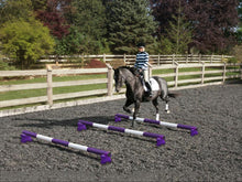 Load image into Gallery viewer, Horse and rider trotting over 3 Purple and White 5 Band Practice Poles with PolePods.