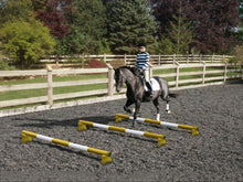 Load image into Gallery viewer, Horse and rider trotting over 3 Yellow and White 5 Band Practice Poles with PolePods.