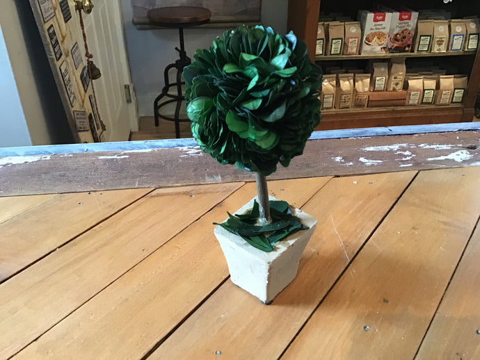 6 inch Boxwood Mini Topiary