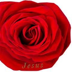 Jesus/Rose of Sharon Wing Flag Set