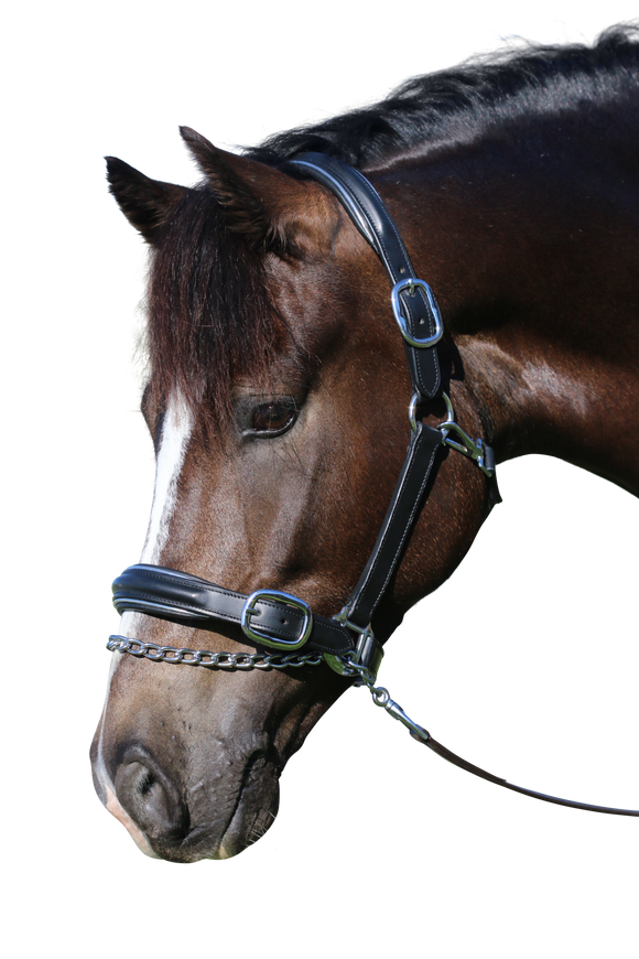 RAISED SILVER PIPE BLACK HALTER - Flexible Fit Equestrian LLC