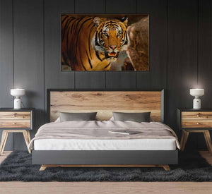 Tiger Poster Print on Metal hanging on the wall above the bed in a beautiful modern bedroom with dark grey walls. The bedside lamps illuminate the slick looking metal print, reflecting the light off it's vivid flat surface