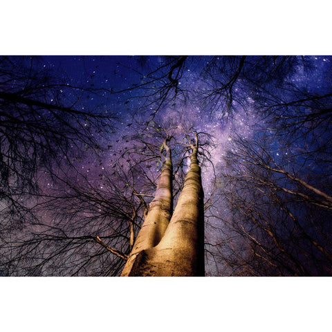 Metal Poster Print of Stars Through the Trees from C'est La Vie Prints