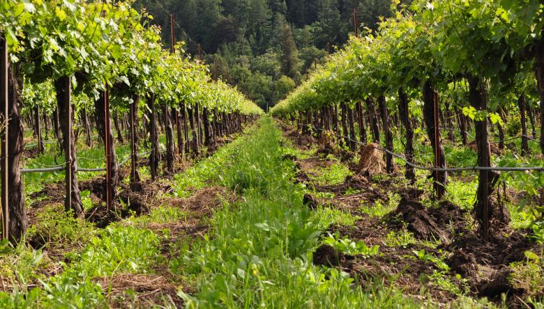 Getting to Know Cool Climate Kosher Wines