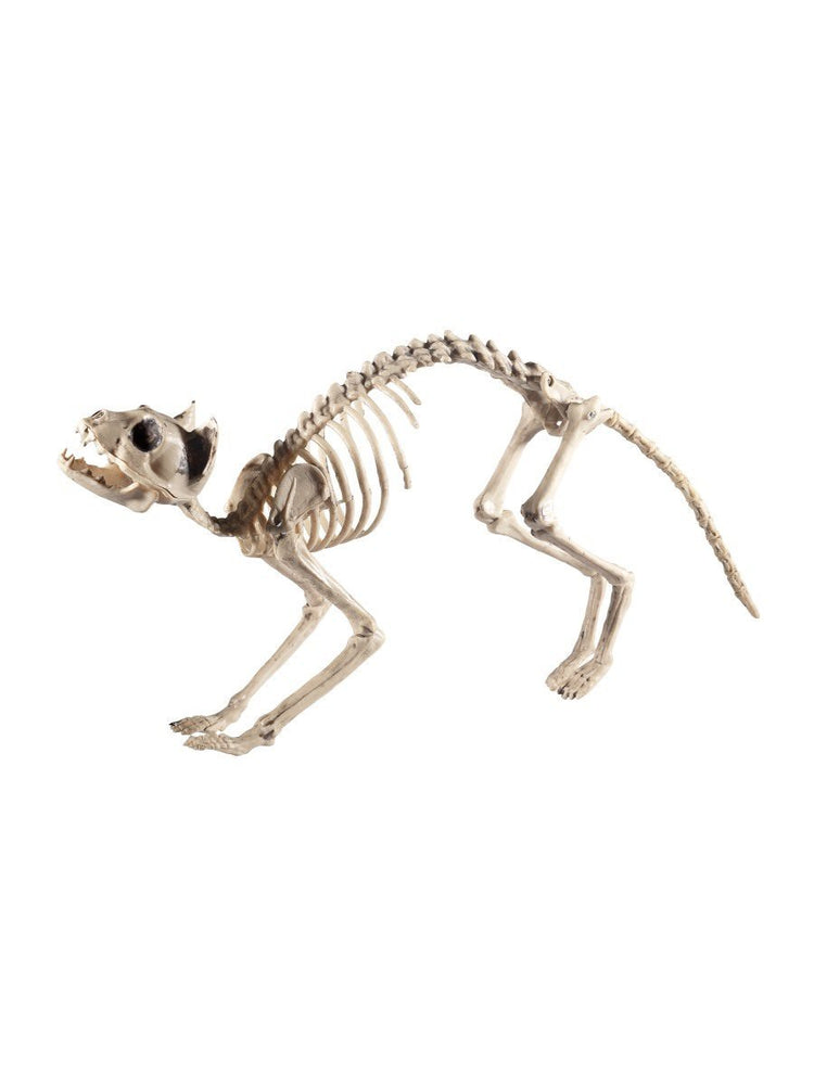 Cat Skeleton Prop  60x12x25cm /24x5x10in