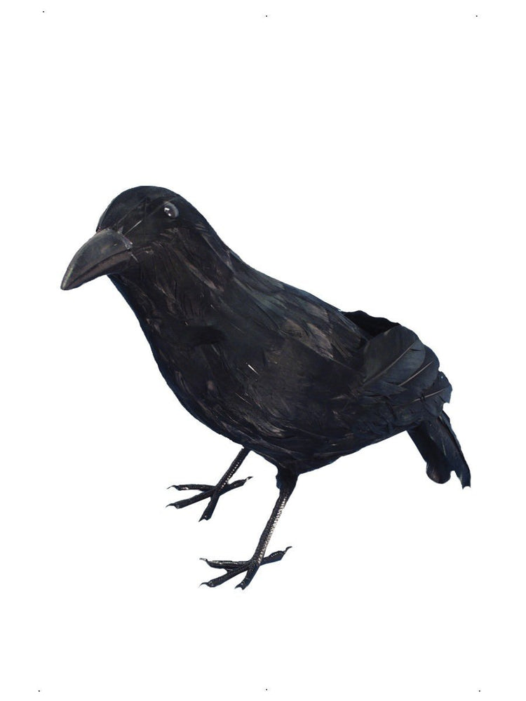 Crow Feathered