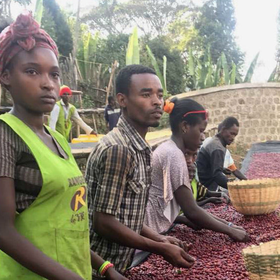 Ethiopia Worka-Sakaro-Wuri Double Washed