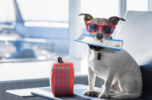 Make Traveling With Your Dog Easy!