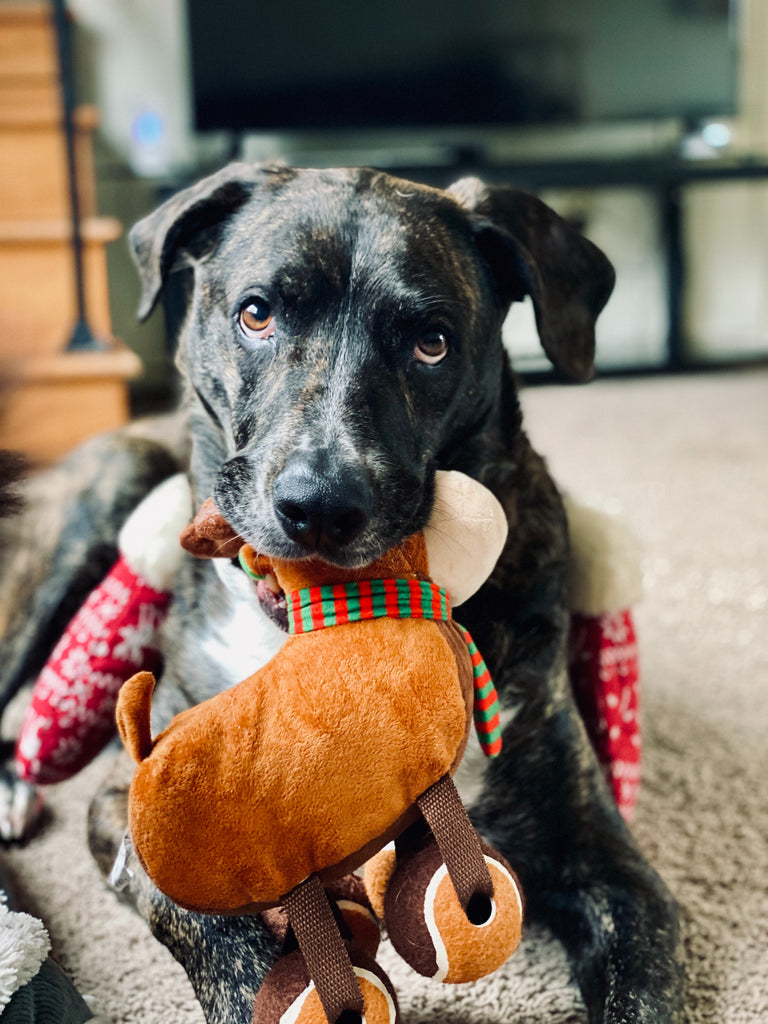 3 More Dogs Toys to Buy in 2020