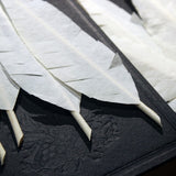 Flash Feathers - Set of 10