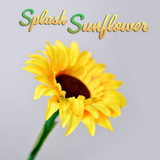 Splash Sunflower