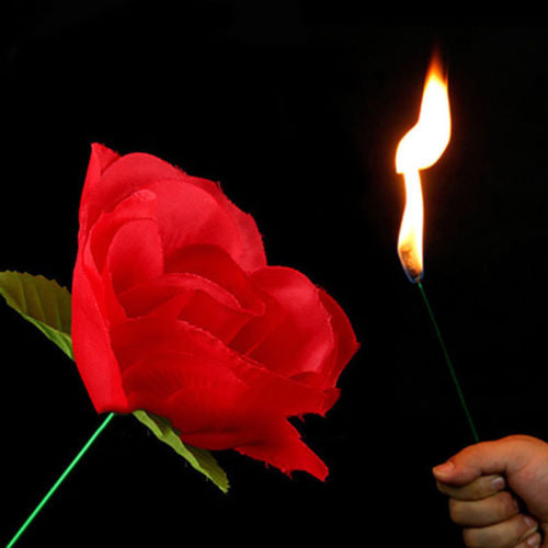 Torch Fire To Rose Flower