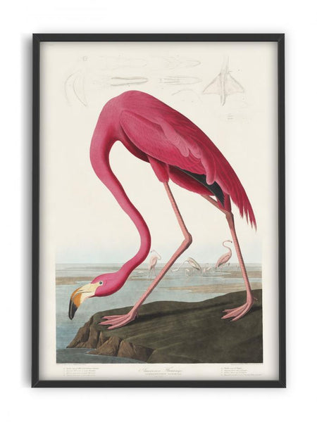 Birds of America - Flamingo