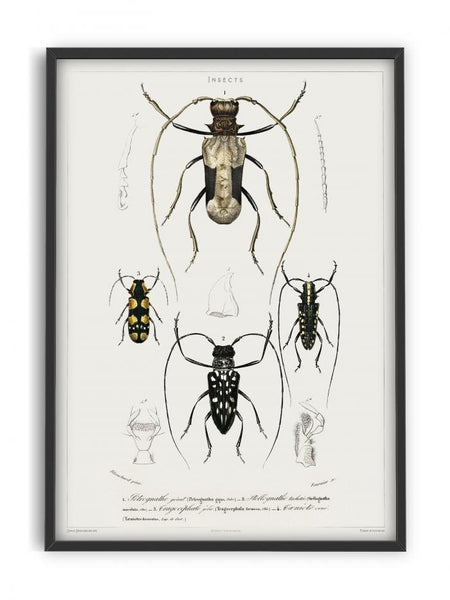 Insects - Entomology collection