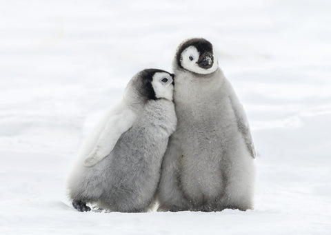 *PRE ORDER* 'Penguin Cuddle' pack of 10 Christmas cards to support children with a brain tumour