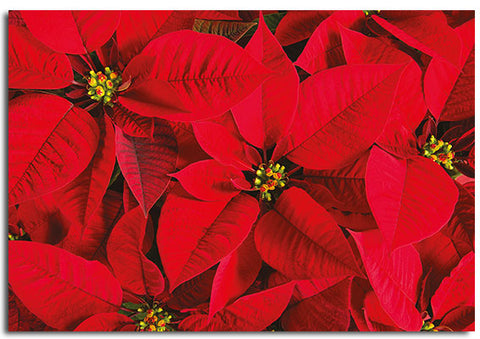 'Poinsettia' pack of 10 Christmas cards