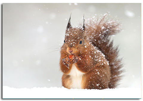 'Red Squirrel' Christmas cards, pack of 10