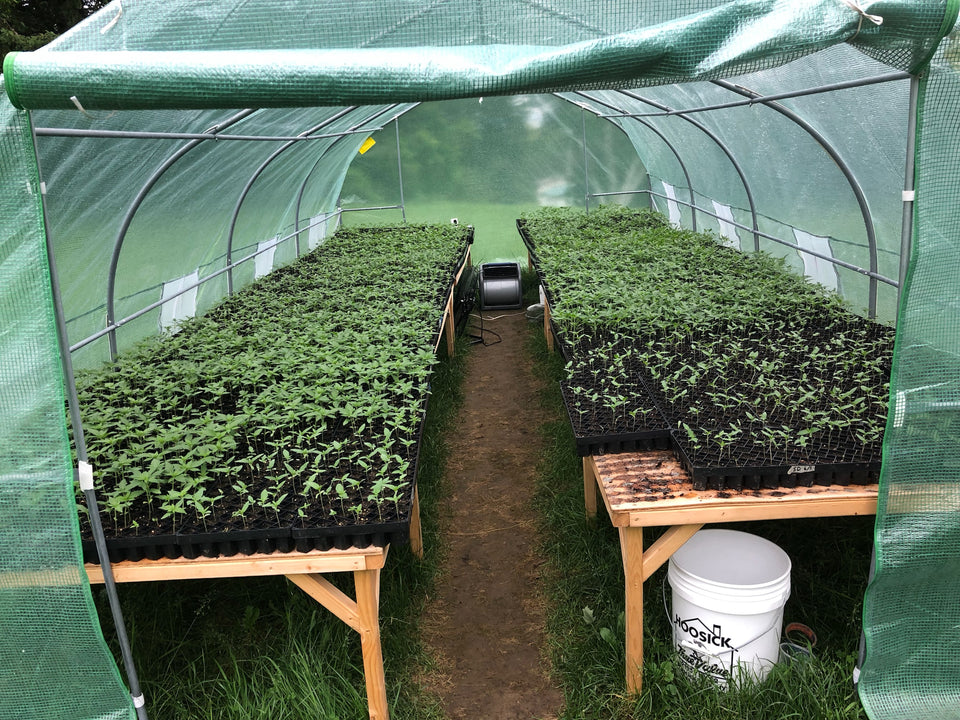 hemp seedlings/ hemp farm/ hemp farm that sells CBD
