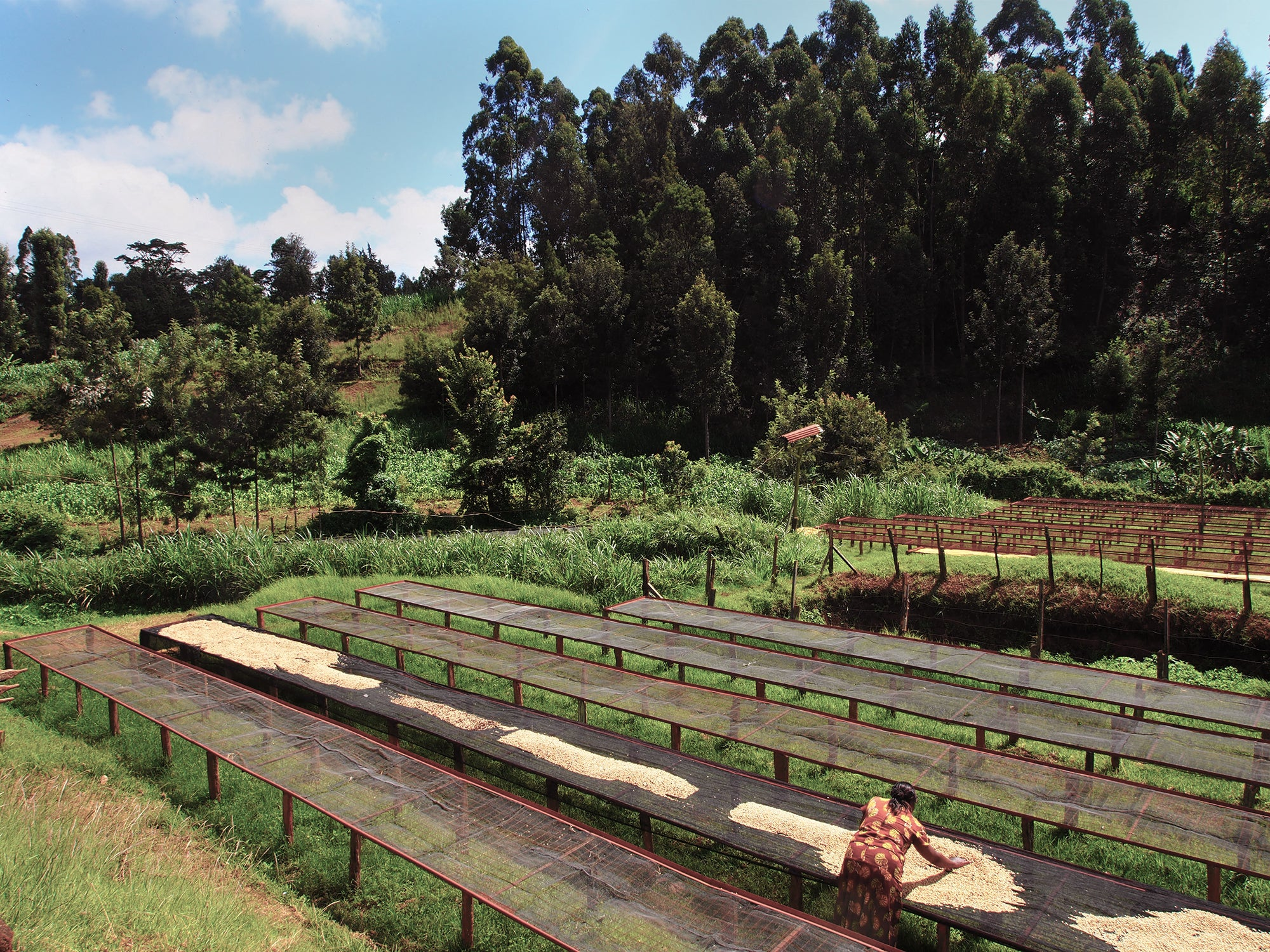 Nyeri drying beds