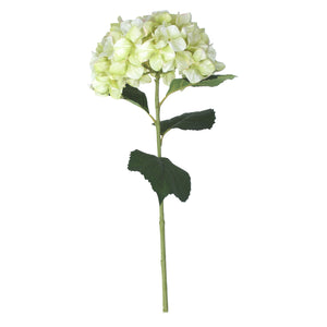 Pale Green Giant Hydrangea Stem