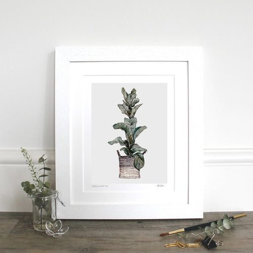 Fiddle Leaf Fig 10x12