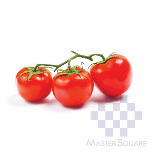 Tomatoes-Master Square