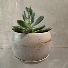 Load image into Gallery viewer, The Lamu Planter