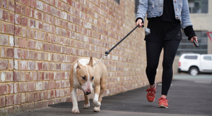 Our Barkfix Is A Safe, Humane And Effective Bark Control & Dog Training Device Using An Ultrasonic Audio Signal. Barkfix Corrects And Eliminates Unwanted Dog Behaviour, Quickly And Effectively! Easy & Safe To Use. Suitable For All Dog Sizes. Wide Control