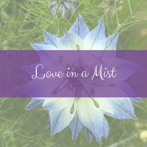 Nigella or Love In A Mist