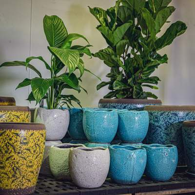 beautiful yellow and blue pots and planters